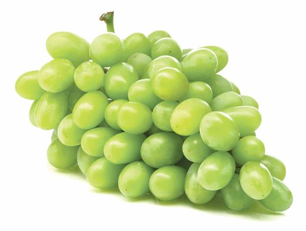 how to grow cotton candy grapes