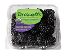 Driscoll's Organic Blackberries
